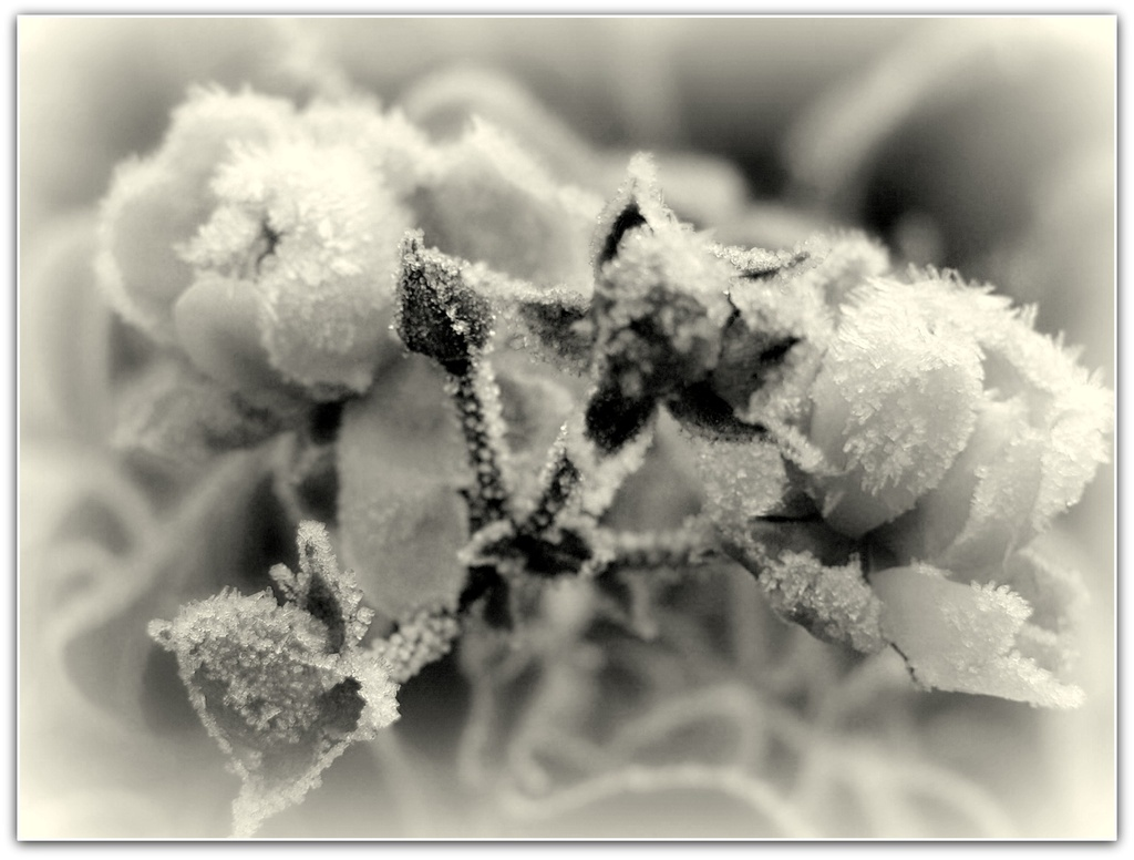 More frost! by judithdeacon