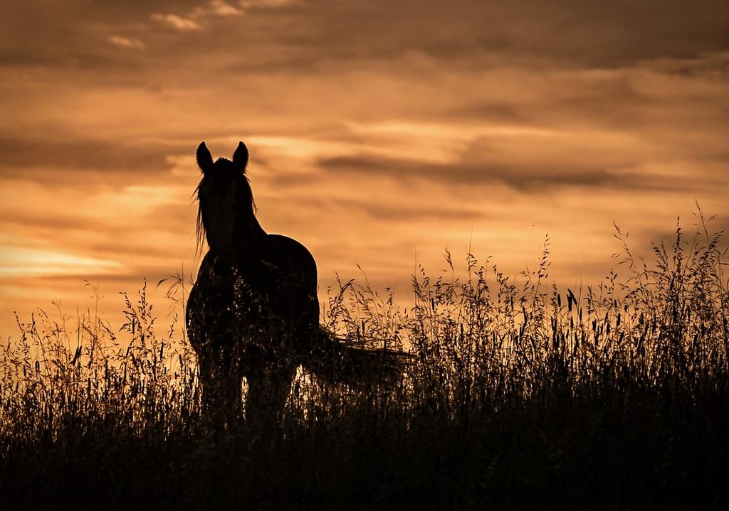 equus by ltodd