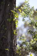 12th Nov 2012 - Trees