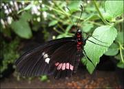 14th Dec 2012 - Butterfly Zoo