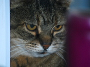 14th Dec 2012 - Here Kitty!