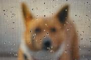 15th Dec 2012 - Peeking Through the Rain