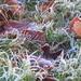 Frosty Ground by filsie65