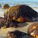 2012 12 17 Seaweed Rocks by kwiksilver
