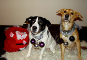 17th Dec 2012 - Dec 17: Tinsel & Baubles