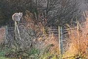 18th Dec 2012 - vantage point