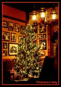 5th Dec 2012 - Christmas Tree