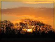 18th Dec 2012 - Golden morning