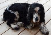 8th Dec 2012 - Abandoned Dog