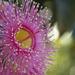 Corymbia SOOC by corymbia