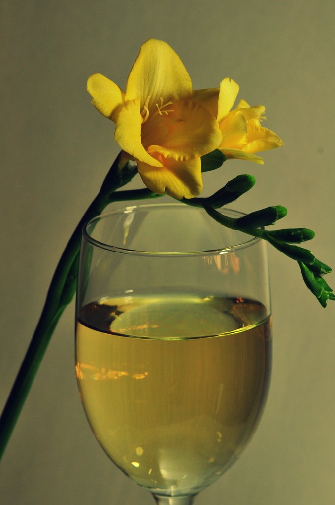 Flowers and Wine by jayberg