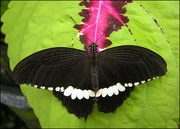 19th Dec 2012 - The color black