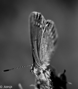 20th Dec 2012 - Flutter by