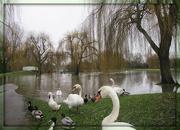 20th Dec 2012 - Flooded - again!