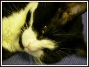 20th Dec 2012 - Council cat