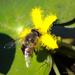 Bee by salza