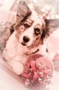 20th Dec 2012 - Fairytale Princess