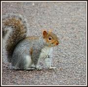 21st Dec 2012 - Squirrel