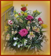22nd Dec 2012 - December flowers