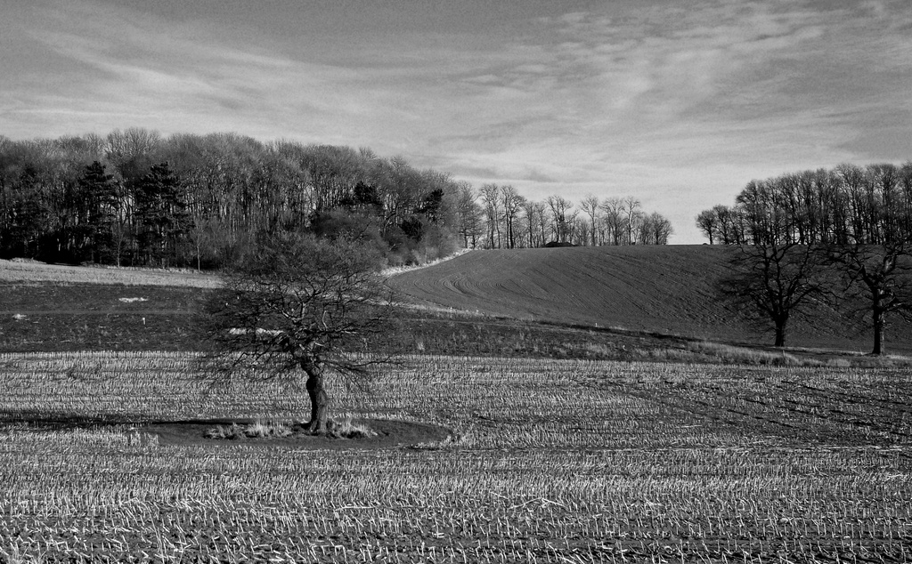 Redhill Fields by phil_howcroft