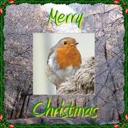 23rd Dec 2012 - Merry Christmas 365ers