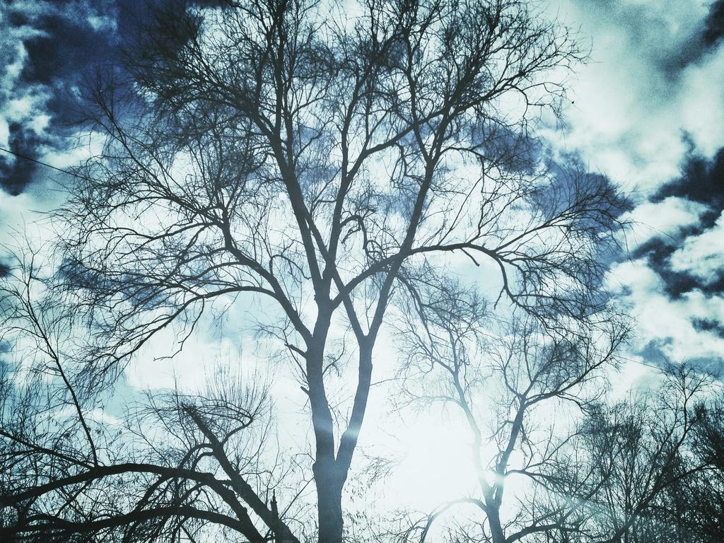 Winter Tree #3 by rich57