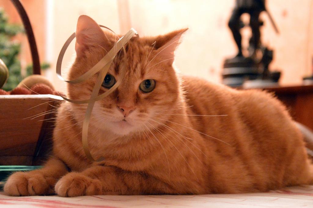 Christmas cat #2 by parisouailleurs