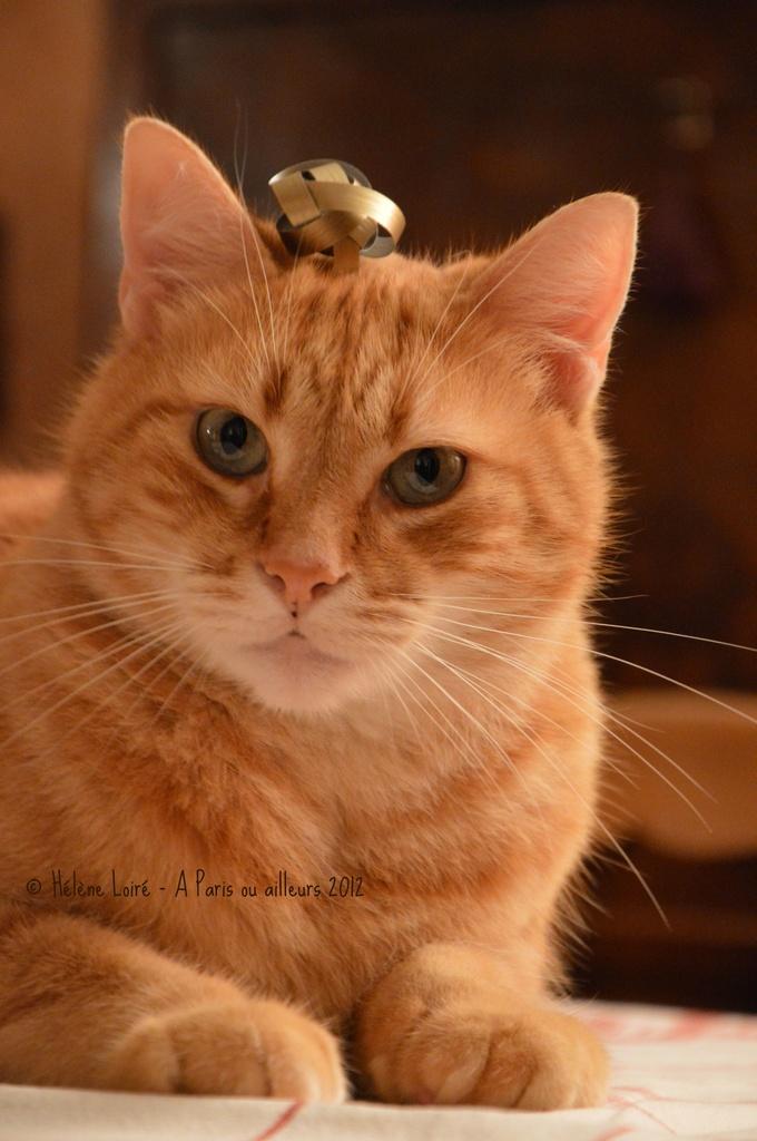 Christmas cat #1 by parisouailleurs