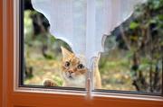 23rd Dec 2012 - Let me in, please!