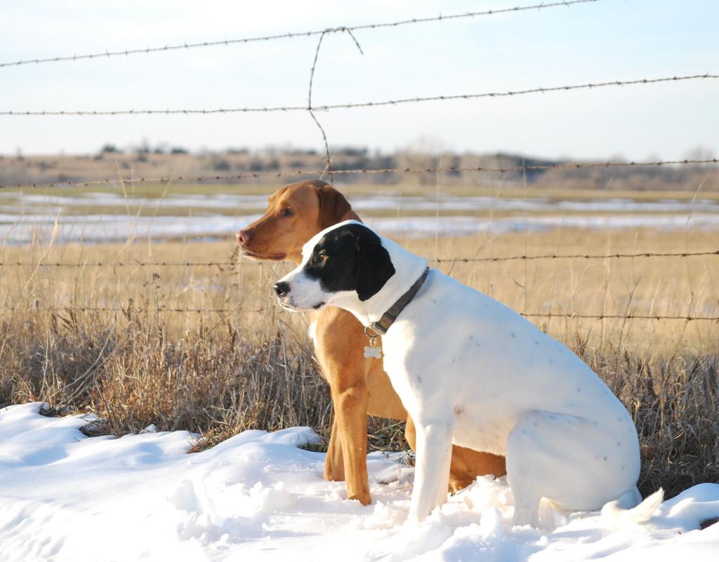 Obedient Snow Buddies by kareenking