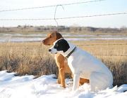 22nd Dec 2012 - Obedient Snow Buddies