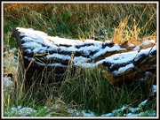 24th Dec 2012 - Yule Log