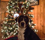 25th Dec 2012 - Merry Swissmas!