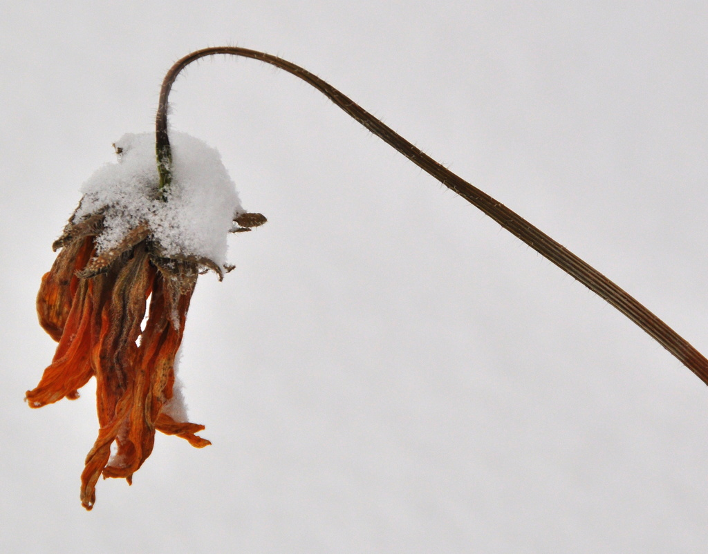 Winter..... by jayberg