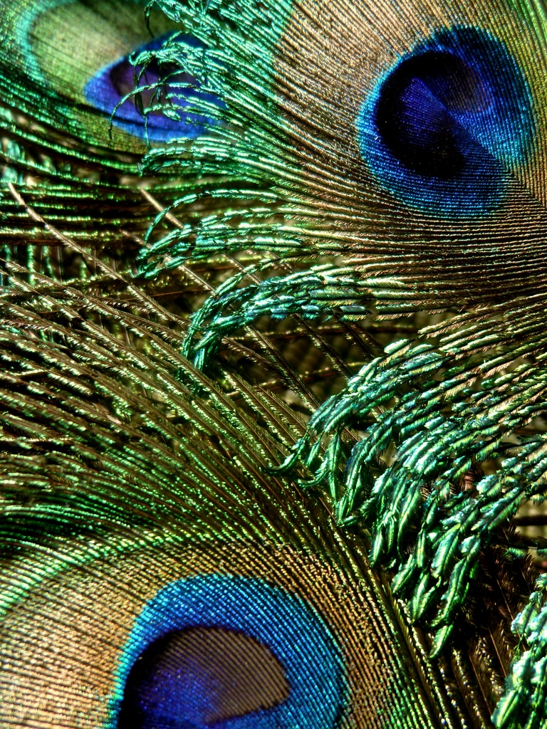 Plumage by calm