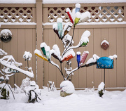24th Dec 2012 - Bottle Tree in the snow.....