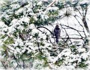 27th Dec 2012 - Winter Hawk