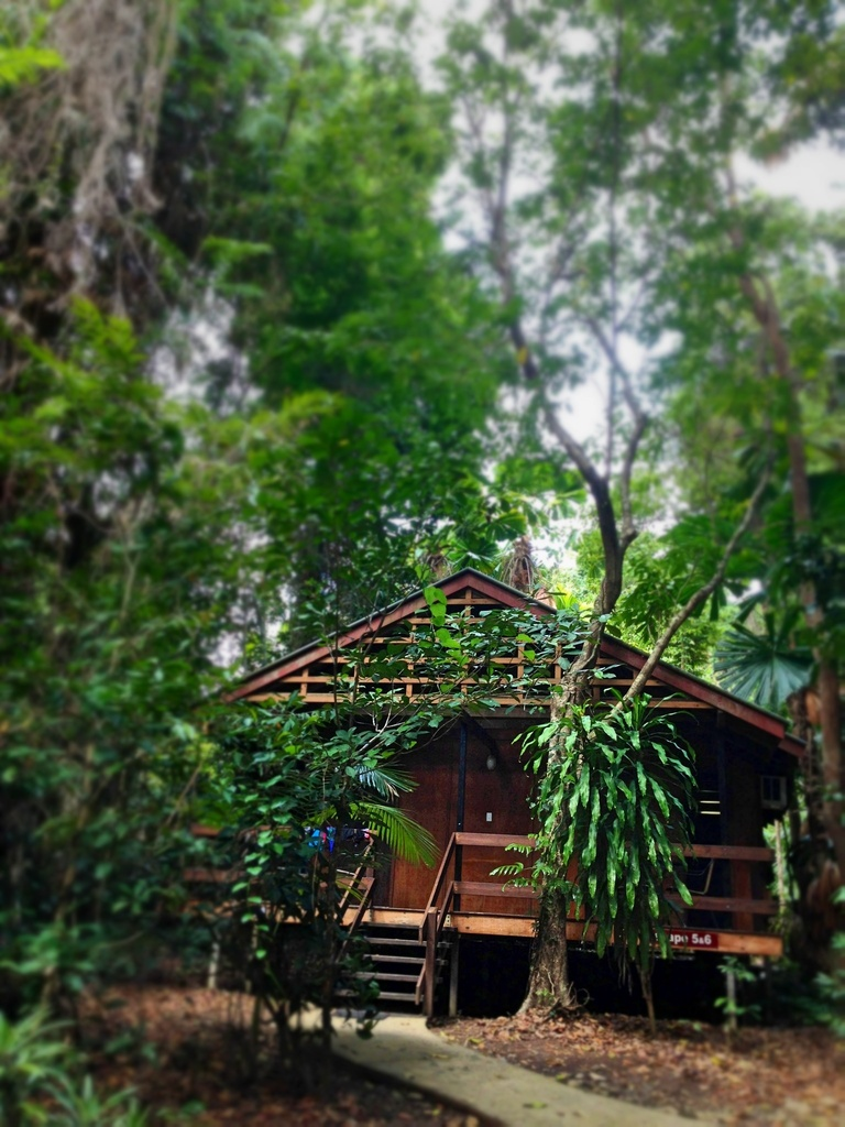 My little wooden lodge In the forest  by cocobella