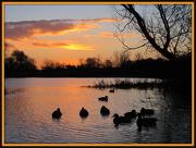 30th Dec 2012 - Golden sunrise