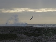 30th Dec 2012 - Big sea and lonely gull