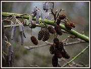 31st Dec 2012 - Fruits of the Forest
