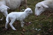 31st Dec 2012 - New Birth