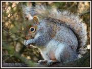 1st Jan 2013 - Squirrel in Priory