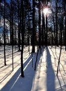 2nd Jan 2013 - Winter Shadows