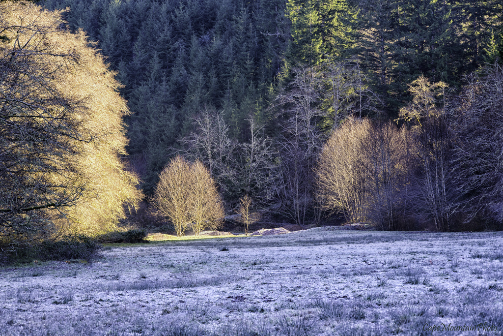 Frosty Meadow by jgpittenger