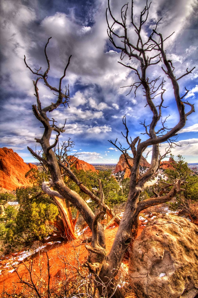 Wicked Tree by exposure4u