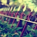 Day 35 - Fence Sitter by nellycious