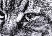 3rd Jan 2013 - Cat Eye Reflection