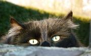 4th Jan 2013 - Cat Eyes