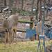 My backyard Visitors  by lesip